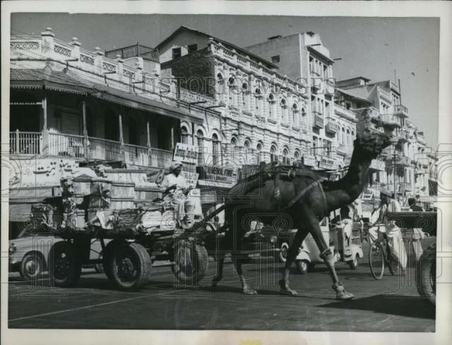 1961 - Karachi Street & Camel (1)